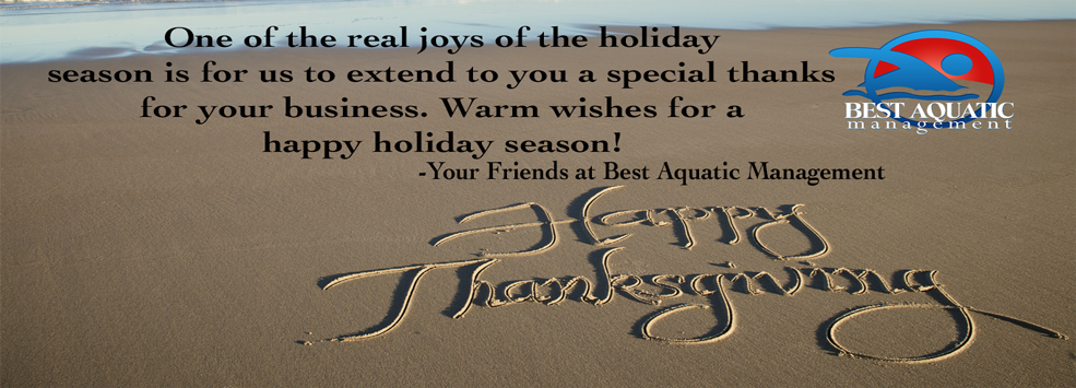 Happy Thanksgiving from BestAquatic